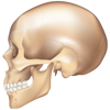 e画像解剖