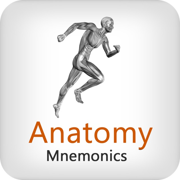 Mnemonics in anatomy