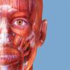 Muscle Premium - Human Anatomy, Kinesiology, Bones