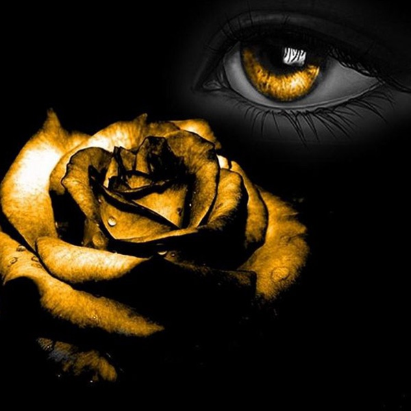Black And Gold Wallpapers Hd Quotes And Art App Apk Download For