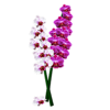 Orchids Sticker Pack Wiki