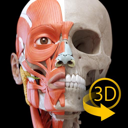 肌肉系统 – 上肢 – 三维解剖学图谱 – 人体的骨骼和肌肉   Muscular System Lite - Upper Limb - 3D Atlas of Anatomy