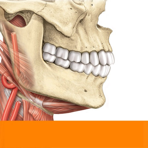 Sobotta Anatomie Atlas Bei Elsevier GmbH