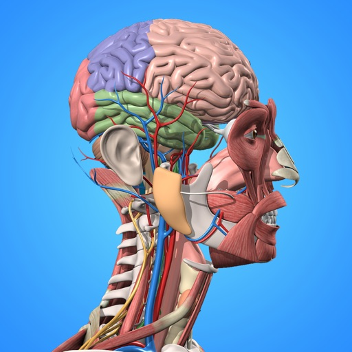 Anatomia Humana 3D - cuerpo de humano y fisiología Por El monfi Nezha