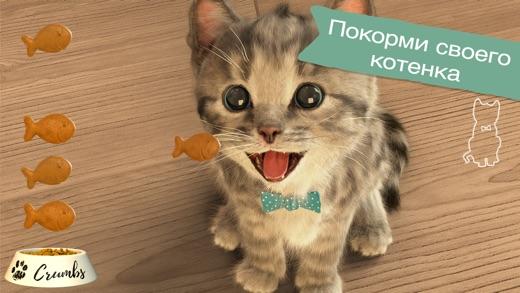 Маленький котенок мой любимый кот скачать