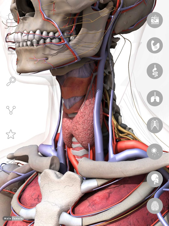 Anatomy Learning 3d Atlas 2017 By Anna Mathe