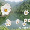 100 Cantonese Songs - Nature Music Player