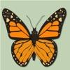 Papillons & Libellules