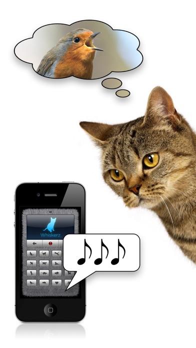 Cat To Human Years Translator