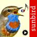 Chants d'oiseaux avec reconnaissance automatiques