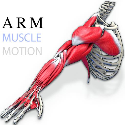about the arm muscles pdf