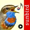 Vogelzang Id Nederland Automatische Herkenning