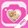 Valentines Greetings Maker PRO