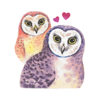 Watercolor Talking Owls Sticker Wiki