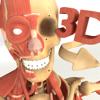 3D Anatomy: Muscle   Skeleton