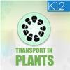 Transport in Plants Biology innovative