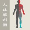 人体解剖图 - 全彩医学专业解剖图谱