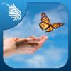 FREE ME/CFS Meditations for Chronic Fatigue M.E &