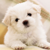 Cute Dog & Puppies Wallpaper   Backgrounds