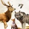 Wild Hunter Sniper 3D - Deer Hunting 2017