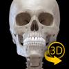 Esqueleto - 3D Atlas de Anatomía