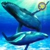 Blue Whale Family Simulator Full Wiki