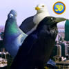 City Birds Simulator Full Wiki
