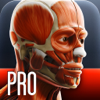 Anatomy In Motion - Complete - Muscle System Flashcards for iPhone and iPad