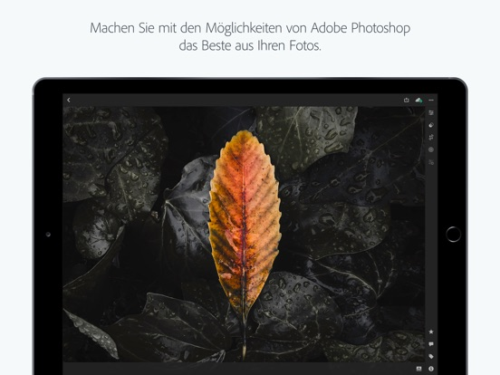 Adobe Lightroom CC for iPad Screenshot