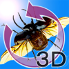 The 3D昆虫 I