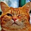 Best Cat Adesivi Confezione