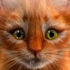 我的小貓(貓模擬器)