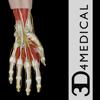 Hand Wrist Pro III - iPad