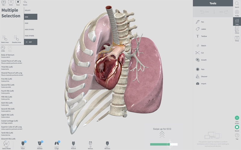 Complete Heart for Mac 1.2 破解版 - 3D心脏医学参考模型