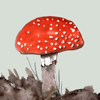Mushrooms & other Fungi UK