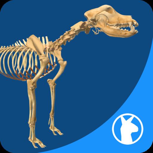 EasyAnatomy: 3D Canine Anatomy