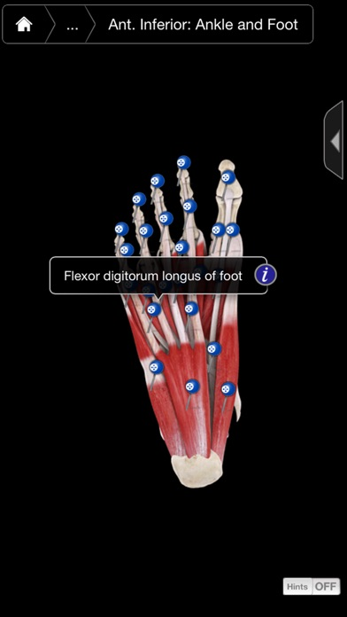 Muscle System Pro III - iPhone Screenshots