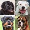 Собаки - Викторина о породах