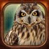 Birds Collection-The library of wild birds video- birds