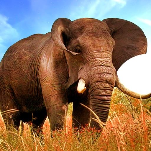 Real Stray Wild Angry Elephant Simulator iOS App