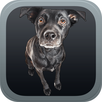 Guide to Dog Breeds app review: find the perfect family member