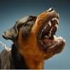 Dog Sounds!