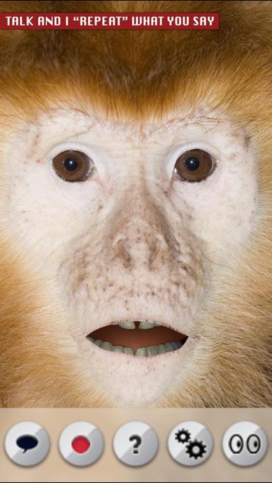 Talking Monkey screenshot one