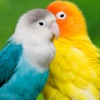 Bird screen Wallpapers app free for iPhone/iPad