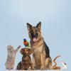 alendario de vacinação/Diário de animais