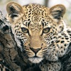 eGuide to Mammals of Southern Africa