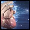 Cardiología 3D pequeños animales