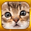 Cute Baby Cat & Kitty Collector Jigsaw-Puzzles for Kids and Toddlers icon