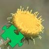 Medicinal Plants Puzzles