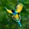 Bird Guide - Offline bird identification app early bird